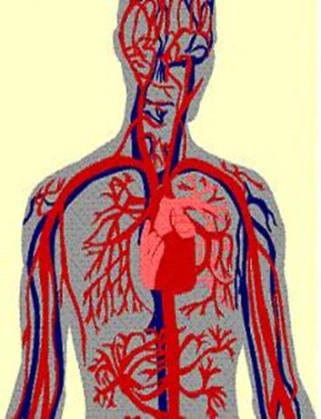 پاورپوینت بررسی دستگاه گردش خون