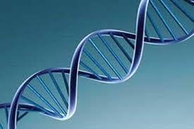 دانلود تحقیق علم ژنتیک